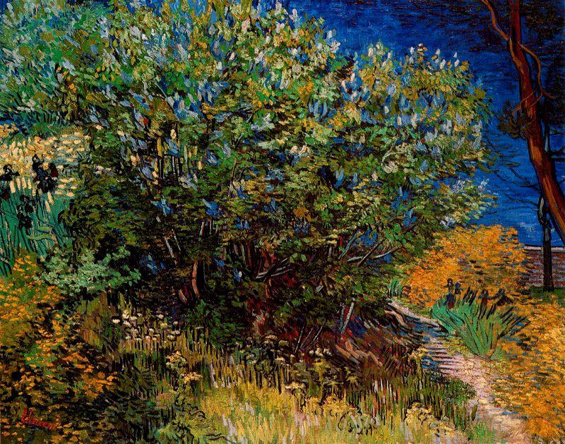 Arbustos Van Gogh 1889