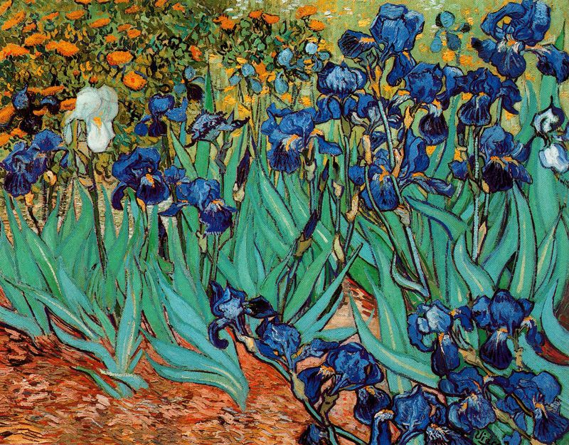Iris Lirios Van Gogh 1889