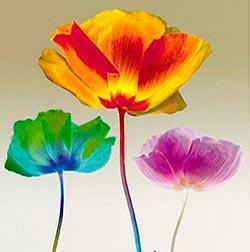 Cómo Pintar Flores Paso A Paso Artistas Que Pintan Flores Pintar